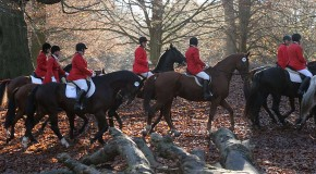 In the pink or in the red? The vexed debate on fox hunting continues