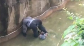 Whether Harambe should have been killed or not misses a deeper point