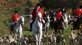 Why the Conservative Party should drop its support for fox hunting