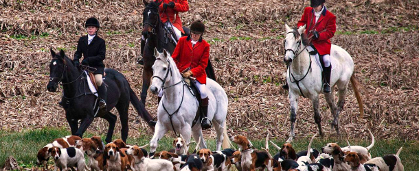 The Tories and the hunt – foxed again?